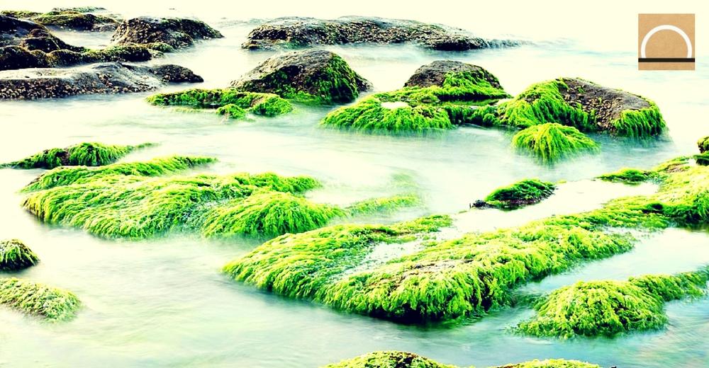 """""""Moco de roca"""" el alga que amenaza los ríos"""