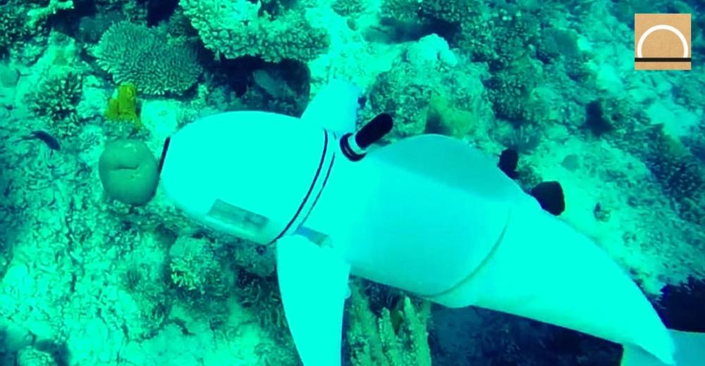 'SoFi', el pez robot que graba peces sin asustarlos