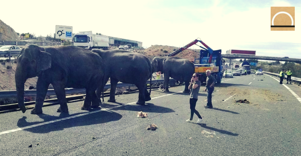 Exigen una ley estatal que prohíba el uso de animales en los circos