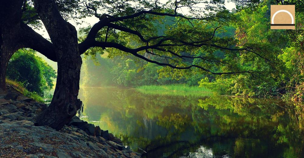 La vegetación y su rol en el futuro del ciclo del agua