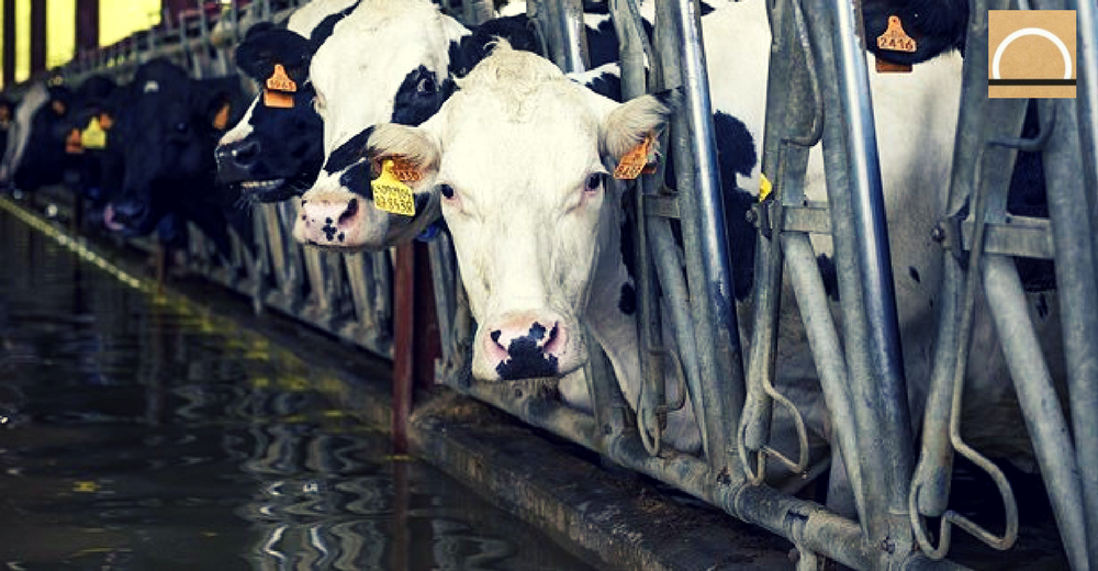 PACMA denuncia los efectos de las riadas en varias granjas de Aragón