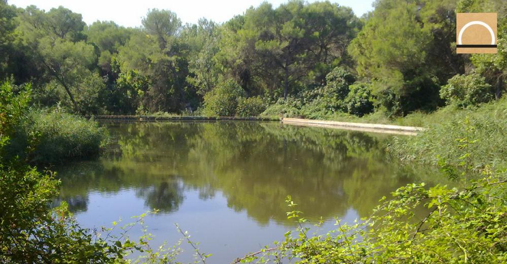 Cataluña libera caudales ambientales para mejorar la calidad de los ríos