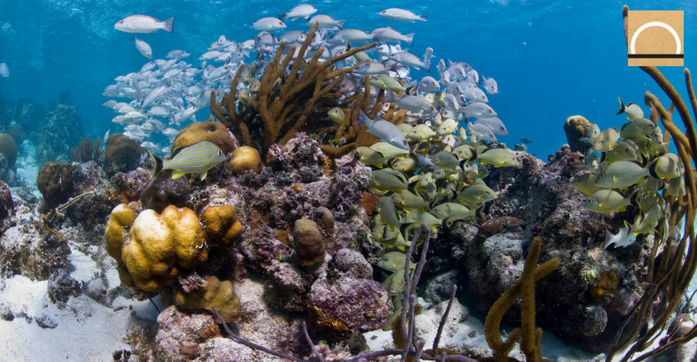 Eliminaron a la barrera de coral de Belice de la lista de sitios en peligro de la UNESCO