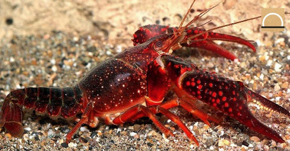 El Congreso aprobó la reforma que indultará a las especies invasoras
