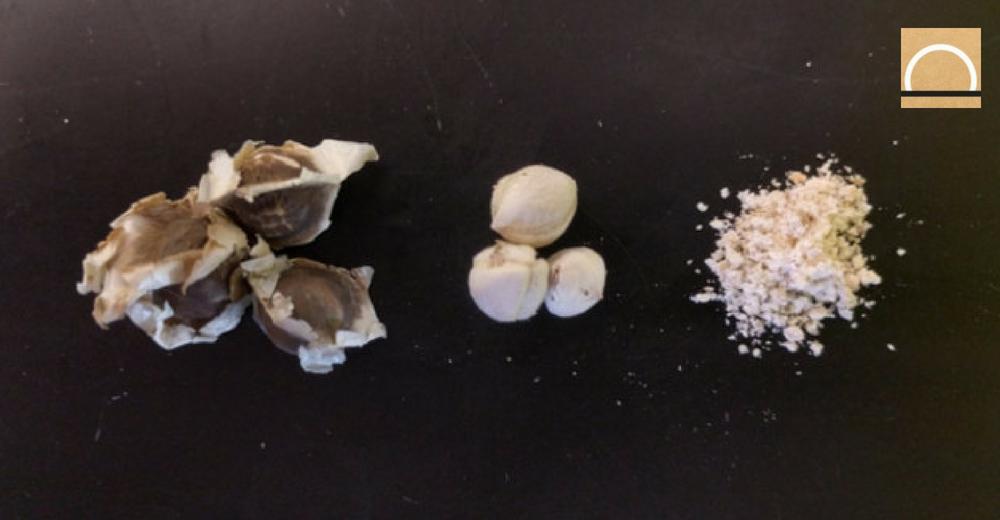 Desarrollan un nuevo método potabilizador con semillas y arena