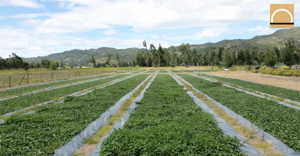 Filtros verdes para el tratamiento de aguas residuales