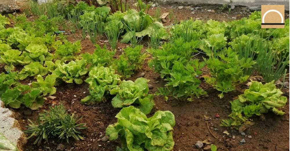 Un proyecto escolar peruano recicla agua para regar sus cultivos