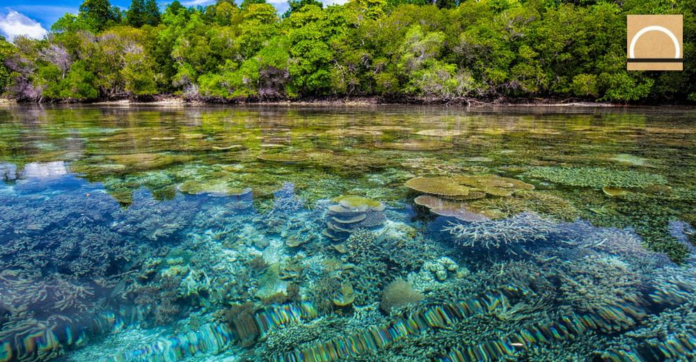 La sobrepoblación de especies invasoras también afecta a los arrecifes de coral