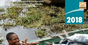 Los alarmantes datos de la sobrepesca según un informe mundial de la FAO
