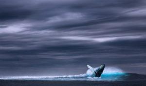 Mayor protección sobre las ballenas y otros cetáceos