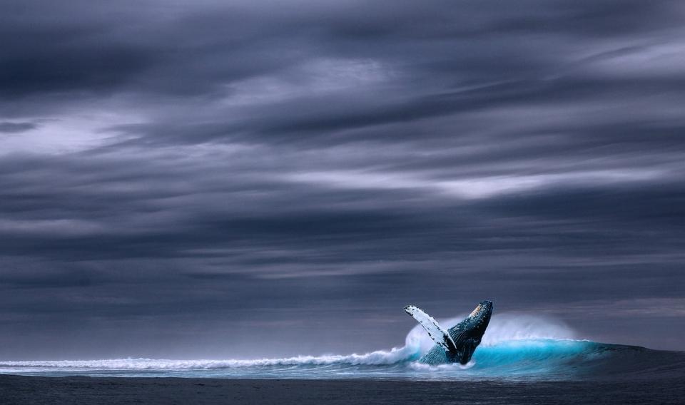 Aumenta la protección sobre las ballenas y otros cetáceos