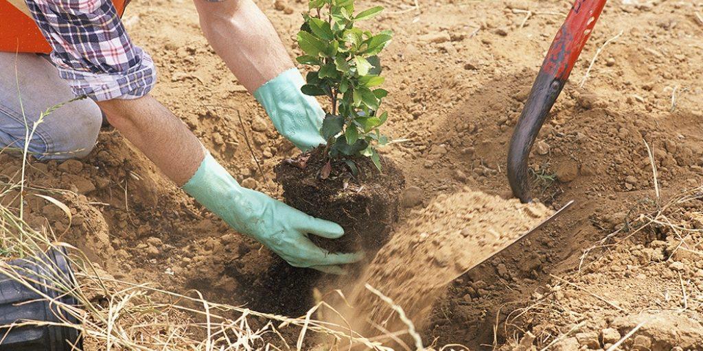Fundación Aquae reduce su huella de carbono por cuarto año consecutivo