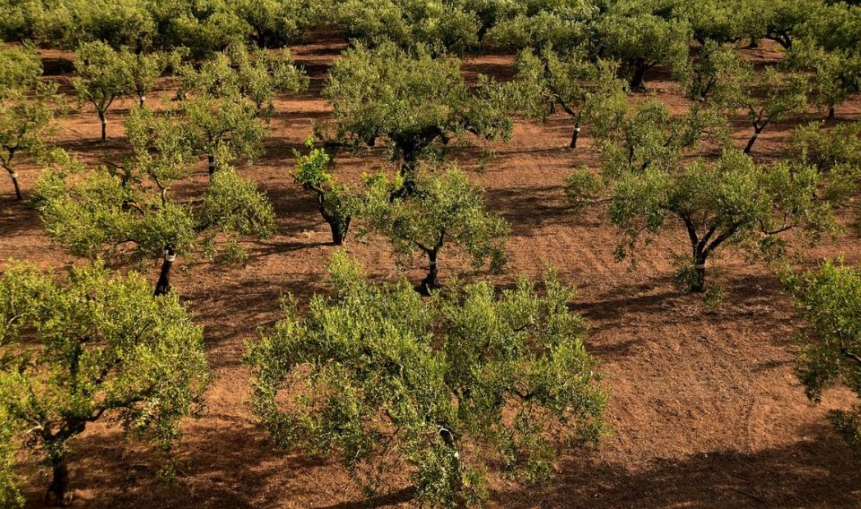 La región sur del Mediterráneo será las más afectada por los efectos del cambio climático