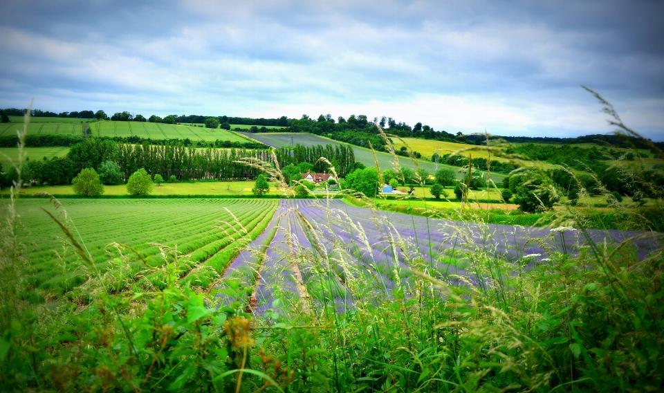 Organizaciones ambientales exigen una política agraria más sostenible