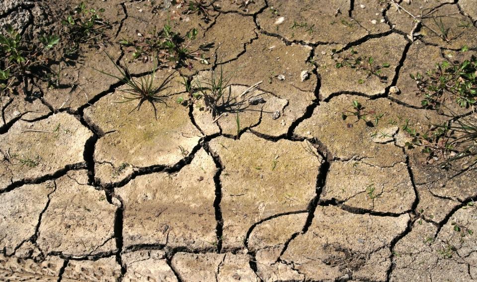 La sequía y el aumento de la temperatura afectará a los cultivos europeos