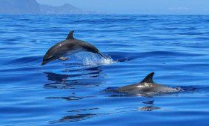 La vida marina en Europa está bajo amenaza creciente