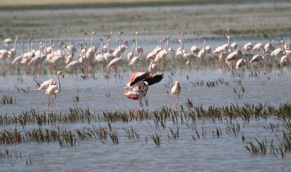 Denuncian el incumplimiento de las recomendaciones de la UNESCO para conservar Doñana