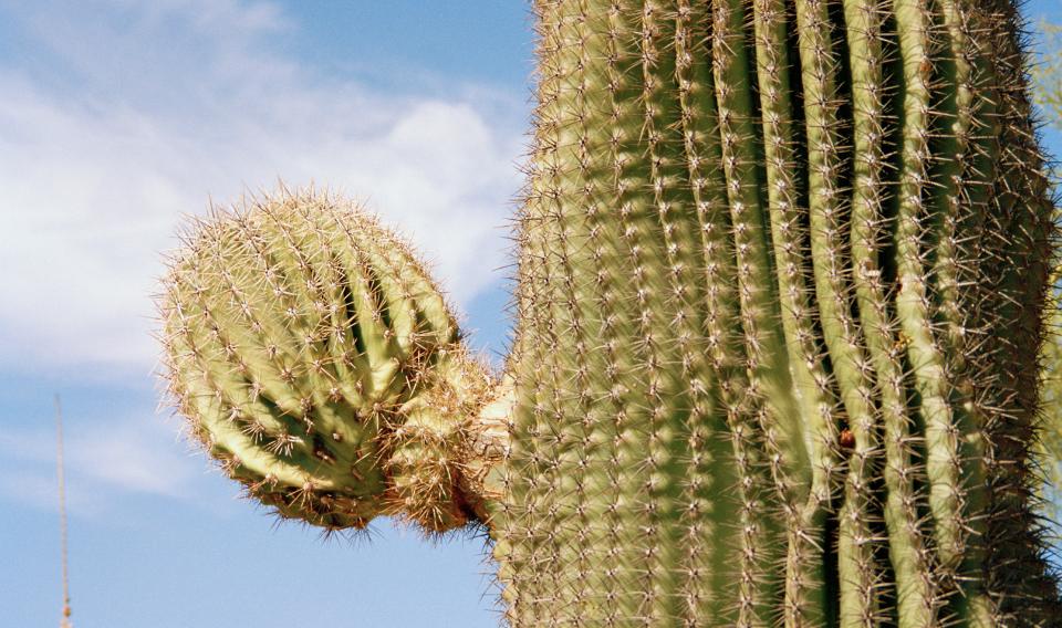 Imitar a la naturaleza para captar agua en el desierto