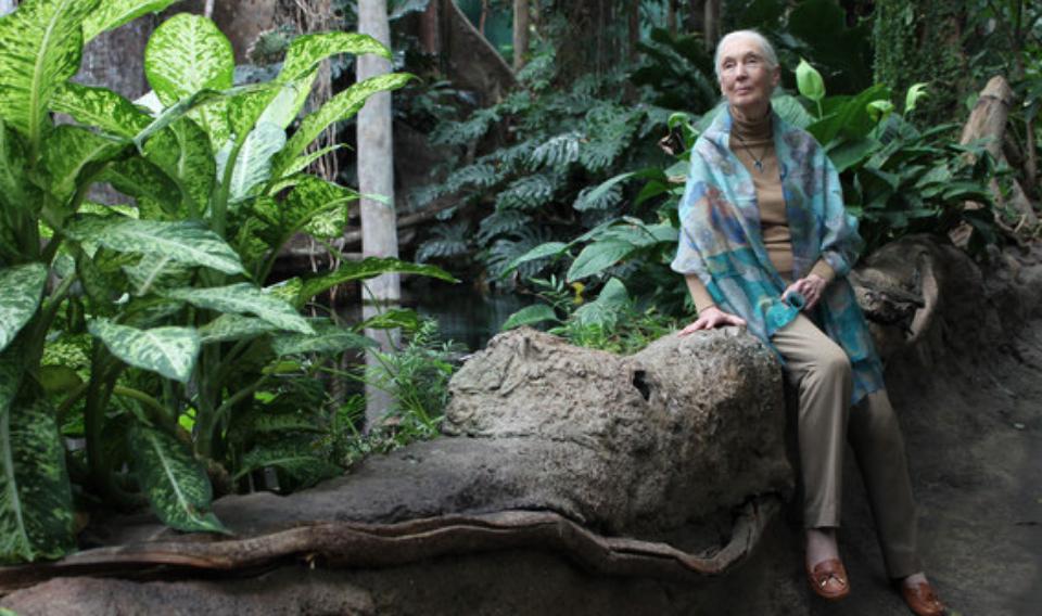 Goodall: «Vivimos la sexta extinción masiva de especies»