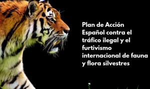 Nuevo golpe al tráfico ilegal de especies amenazadas en España