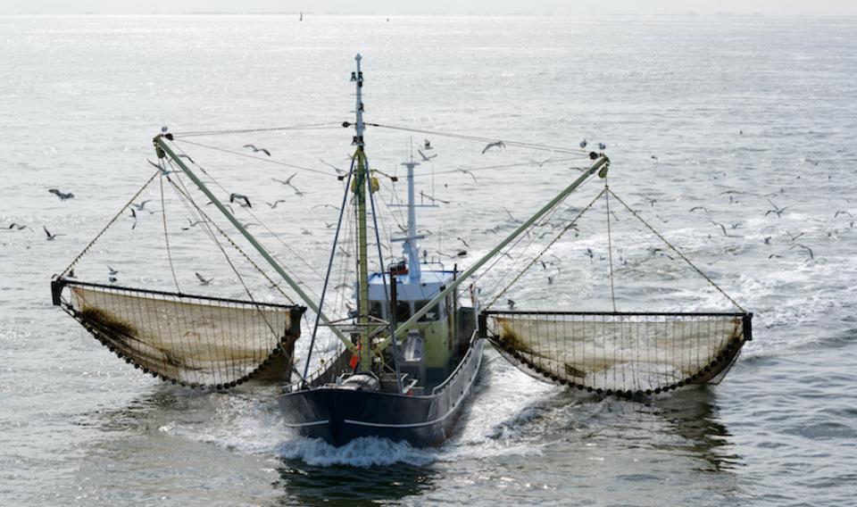 Europa intensifica las medidas contra la pesca eléctrica