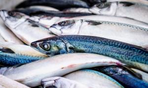 Los contaminantes que hay en el agua modifican el metabolismo de los peces