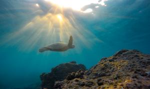 La biodiversidad está en peligro de extinción