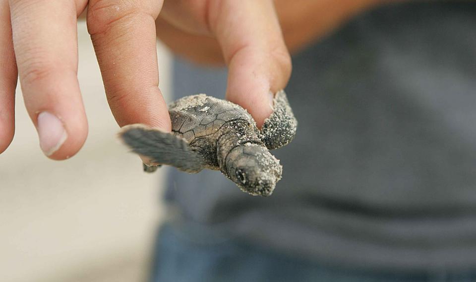 Una 'app' para salvar a las tortugas marinas