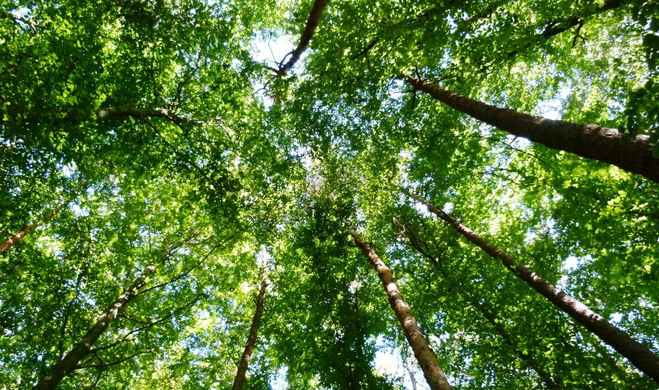 China apuesta por la reforestación para afrontar la contaminación