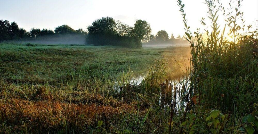 El dióxido de carbono alto produce tallos más finos en los pantanos