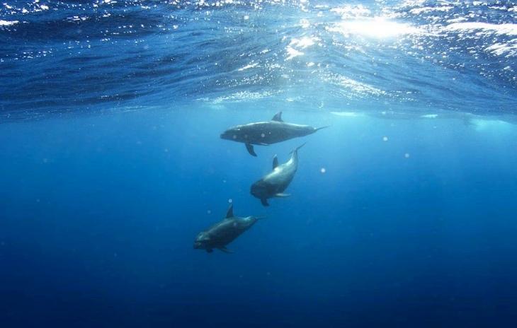 Los delfines del Canal de la Mancha tienen la piel contaminada