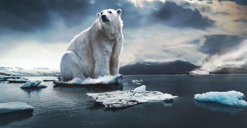 Una aplicación permitirá evaluar el impacto del cambio climático en la biodiversidad