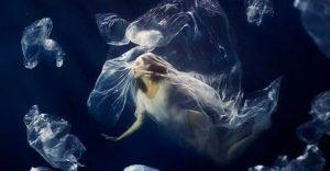"""La muestra fotográfica """"Ahogándose en plástico"""" reivindica un océano limpio"""