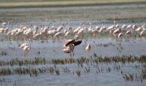 Doñana, una de las regiones más afectadas por las inundaciones costeras