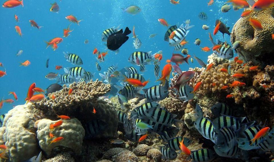 Acuerdo global para proteger 13m de Km² de zonas marinas