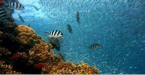 El Mediterráneo cuidará mejor su pesca