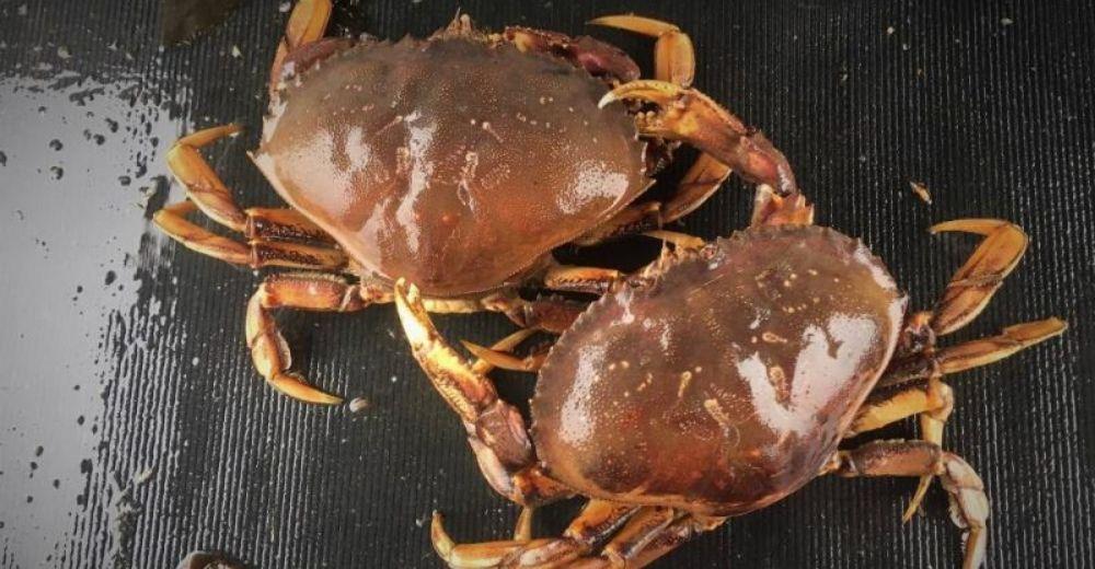 El ácido del Pacífico deshace las conchas de los cangrejos