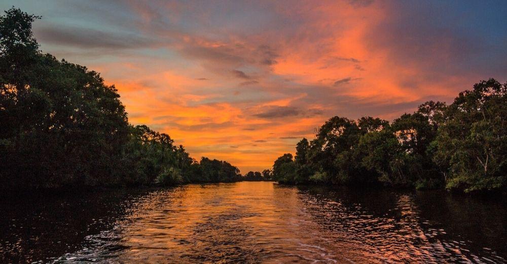 El valor real de los manglares en el ecosistema mundial