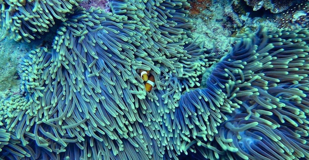 Corales impresos en 3D para frenar el cambio climático
