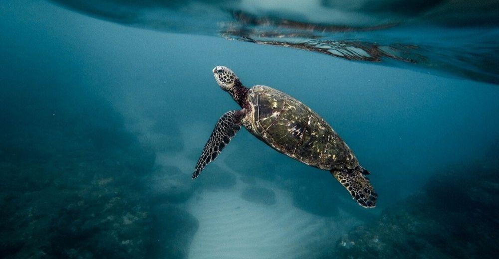 La regeneración de los océanos es real
