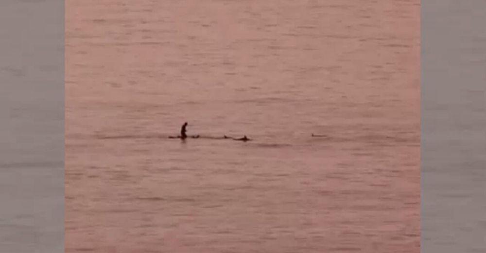 Los delfines visitan las costas de Radazul