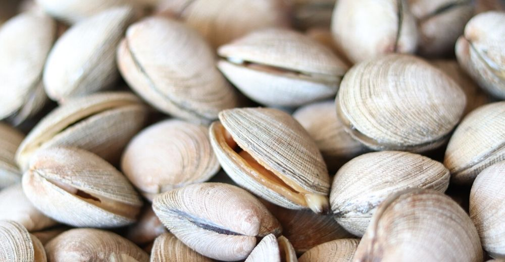 Las almejas finas en peligro por contaminación