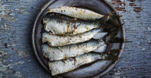 En el Mediterráneo el 58% de las sardinas tienen microplásticos