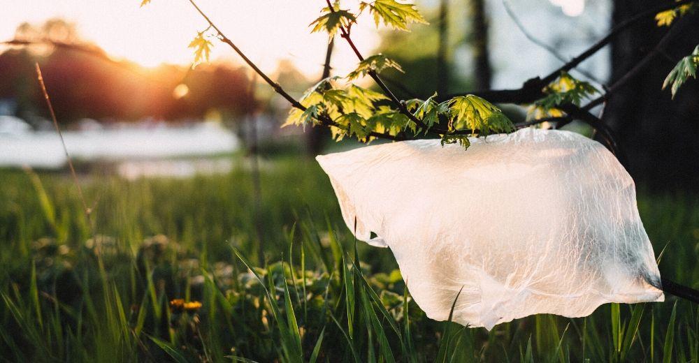 La necesaria eliminación de las bolsas de plástico