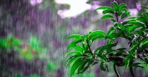 Inteligencia artificial para mejorar la previsión de lluvia