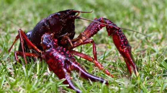 Las especies exóticas invasoras, un serio peligro para los humedales