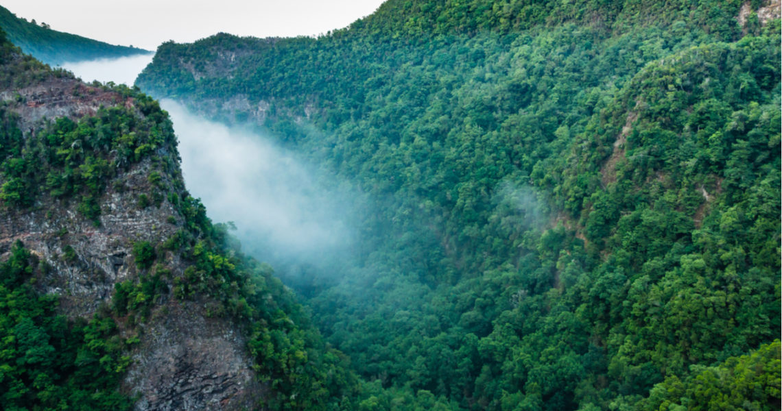 Un colector de agua de niebla para recuperar zonas quemadas o desertificadas